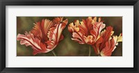Summer Blossoms 3 Framed Print