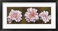 Summer Blossoms 5 Framed Print