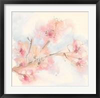 Pink Blossoms II Framed Print