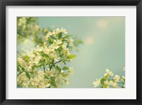 Spring Beauty I Framed Print