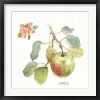 Framed Orchard Bloom I
