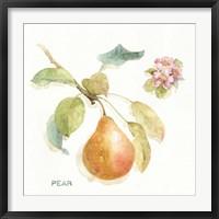Framed Orchard Bloom II