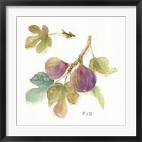 Orchard Bloom III Framed Print