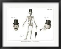 Framed Dandy Bones