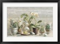 Framed Greenhouse Orchids on Wood