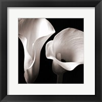 Softness II Framed Print