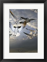 Framed White Doves Flying in Sky