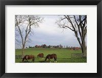 Framed Horses Eating in Pasture