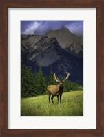 Framed Elk Against Mountainside