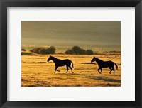 Framed Horses Running at Sunset