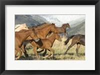 Framed Brown Wild Horses Running