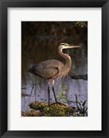 Framed Heron in Lake