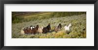 Framed Horses Running through Weedy Field