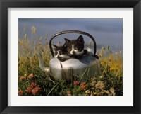 Framed Kitten on Tea Pot in Field