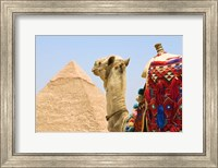 Framed Close Up of Camel and Pyramid