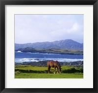Framed Single Brown Horse in Field
