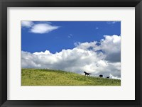 Framed Horses Far Away in Meadow