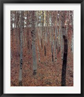 Framed Forest of Beech Trees