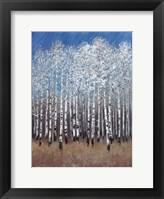Cobalt Birches II Framed Print