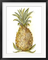 Framed Pineapple Sketch I