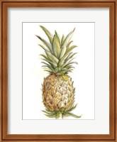 Framed Pineapple Sketch II