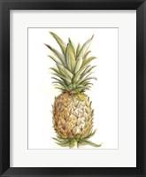 Pineapple Sketch II Framed Print