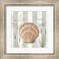 Framed Seashells by the Seashore II