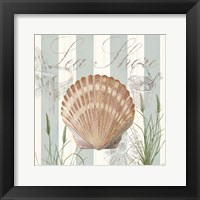Framed Seashells by the Seashore II