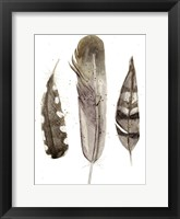 Framed Earthtone Feathers II