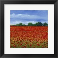 Field of Poppies II Framed Print