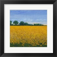 Framed Field of Sunflowers I