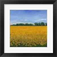 Framed Field of Sunflowers II
