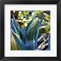Succulent Vibes I Framed Print
