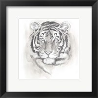 Big Cat Study II Framed Print