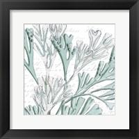 Aqua Marine VII Framed Print
