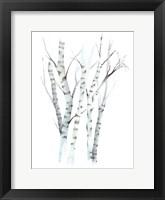 Framed Aquarelle Birches II