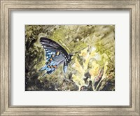 Framed Butterfly in Nature I
