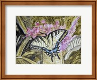 Framed Butterfly in Nature II