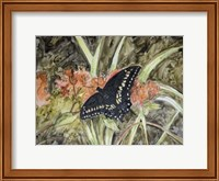 Framed Butterfly in Nature III