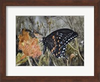 Framed Butterfly in Nature IV