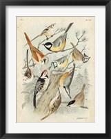 Framed Gathering of Birds II