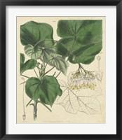 Curtis Leaves & Blooms I Framed Print
