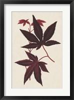 Framed Japanese Maple Leaves I