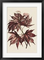 Framed Japanese Maple Leaves II