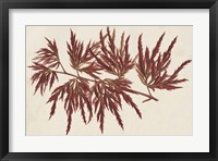 Framed Japanese Maple Leaves IV