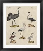 Framed Heron Classification I
