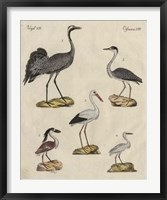 Heron Classification I Framed Print