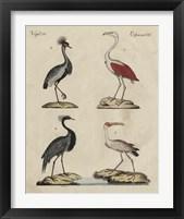 Framed Heron Classification II
