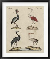 Heron Classification II Framed Print