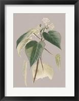 Framed Botanical Cabinet II